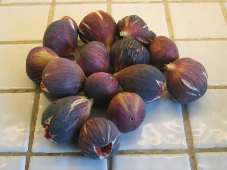 figs galore from cvj's garden