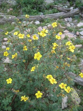 last wildflowers