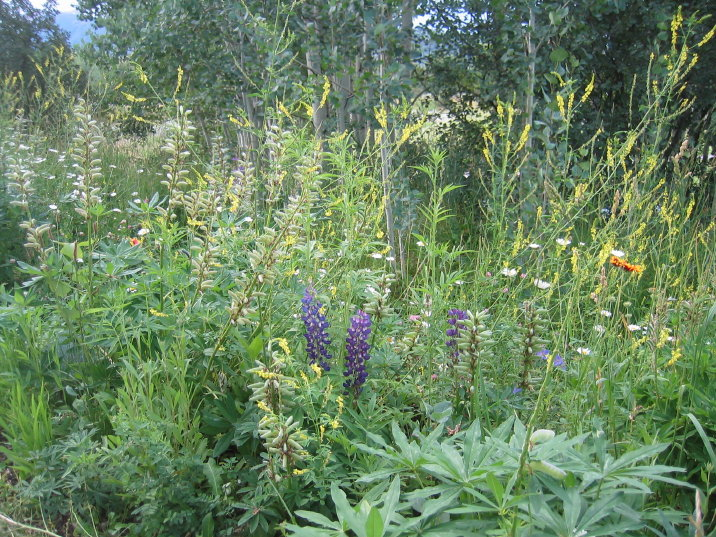 wild flower gardens at aspen institute