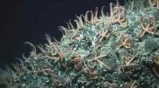 starfish mountain - http://news.bbc.co.uk/1/hi/sci/tech/7408161.stm