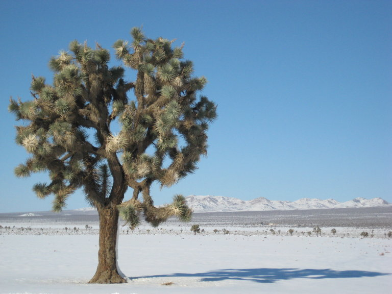 joshua tree at el mirage lake