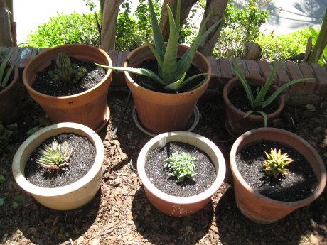 succulents_7