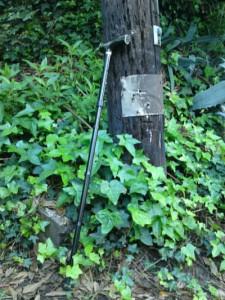 walking_stick