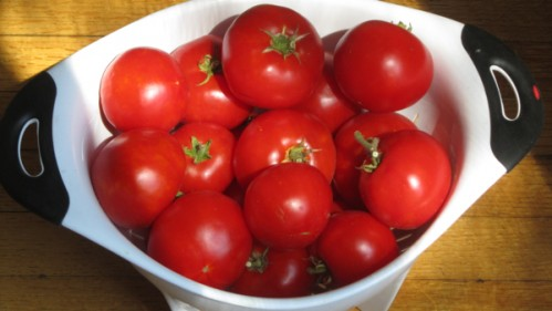 late_tomatoes