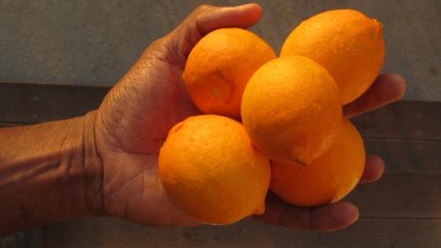 lemons_from_garden_23_01_2014