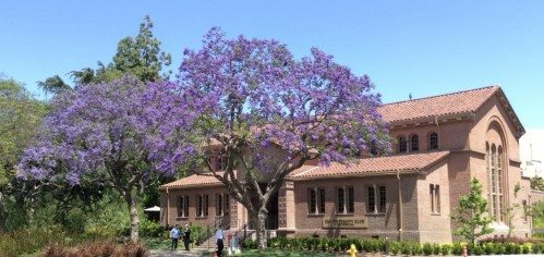 jacaranda_april_2014