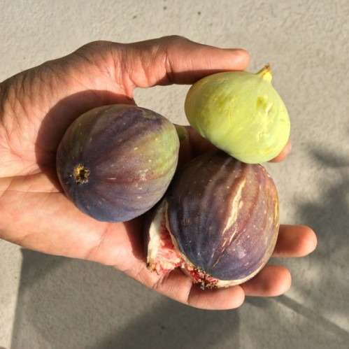 first_figs_2014