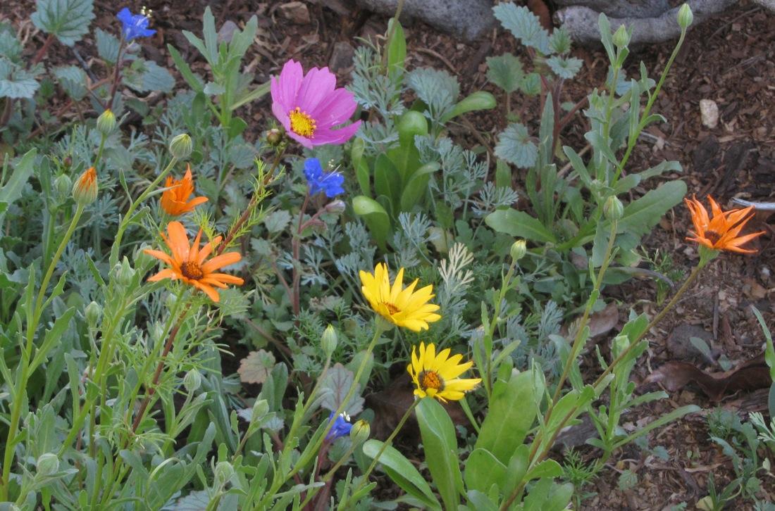 wild_flowers_3_3_15