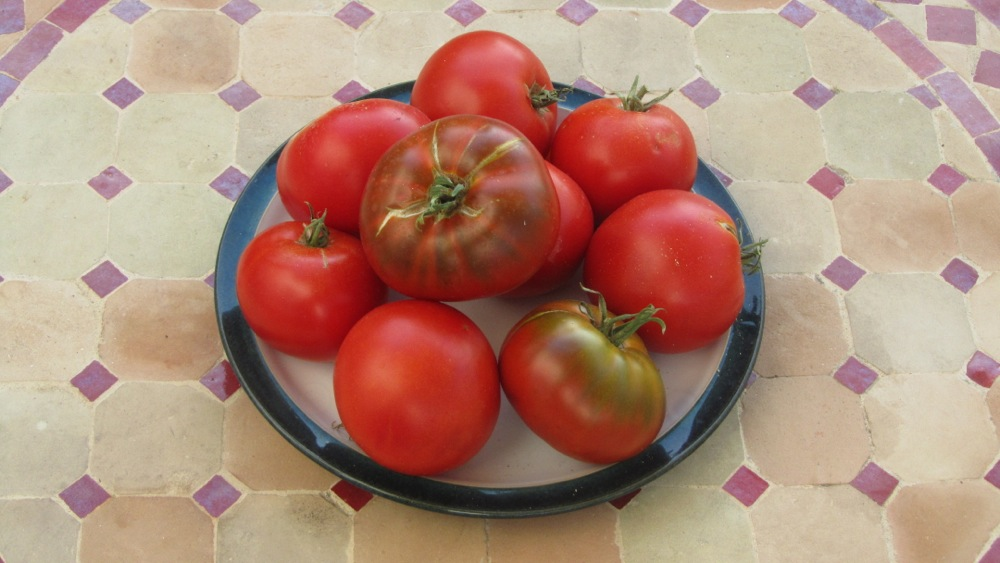 red_tomatoes_aug_2015